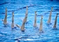 Team BC synchronized swimming makes a splash in prelims